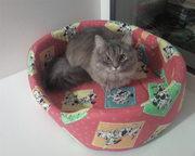 подарю кошку 9 месяцев